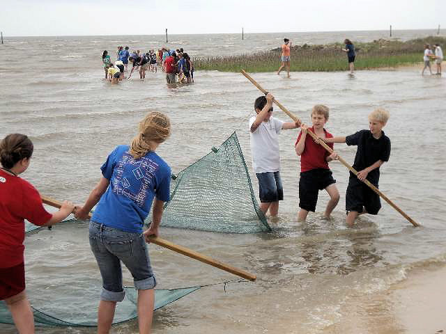 Students learn to seine and identify estuarine species on a Gulf of Mexico barrier island, part of a 2-day field trip funded by a NOAA B-WET grant to the University of Southern Mississippi. Photo courtesy of NOAA Gulf of Mexico B-WET.