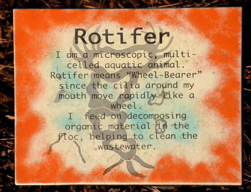 A plaque in front of the rotifer sculpture describes the microorganism and how it helps clean wastewater. Photo courtesy of Ristich.