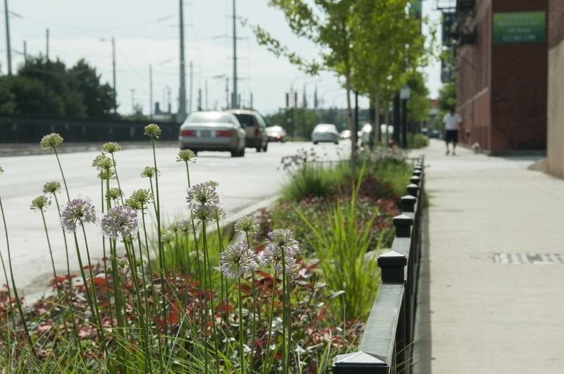 The green street, Blue Island Avenue and Cermak Road in Chicago's Pilsen neighborhood, features vegetated planters, bioswales, rain gardens and below-ground infiltration basins. The Metropolitan Water Reclamation District of Greater Chicago (MWRD) started monitoring the area in 2009 to find that the street caputures up to 80% of a 25.4-mm (1-in.) in 5-hour storm. Photo courtesy of Dan Wendt, MWRD.