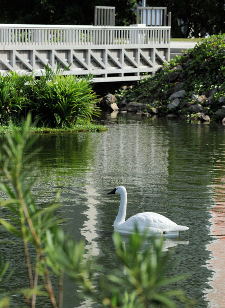 Robotic swans collect real-time data and monitor levels of different elements of water quality such as acidity, dissolved oxygen, turbidity, and chlorophyll. Photo courtesy of the National University of Singapore.