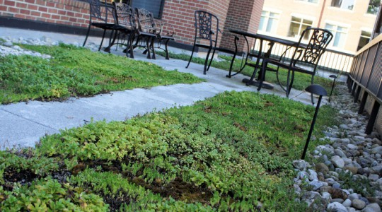 As part of WEF's Low Carb(on) Diet Initiative, in 2007 WEF constructed a green roof and terrace. WEF photo/Fulcher.