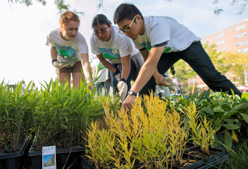 WEFTEC® 2015 volunteers plant native prairie grasses and flowers in a rain garden and outdoor classroom at the Pershing Magnet School (Chicago). Photo courtesy of the Metropolitan Water Reclamation District of Greater Chicago.