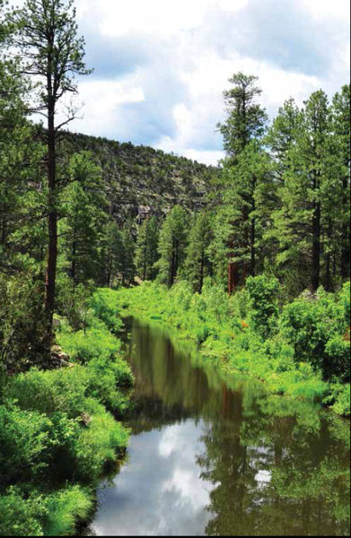 Tap to Top uses the message that the supply of local craft beer depends on a clean water source, and clean water depends on restoring the Salt and Verde river watershed as well as national forests. Photo courtesy of Coconino National Forest.