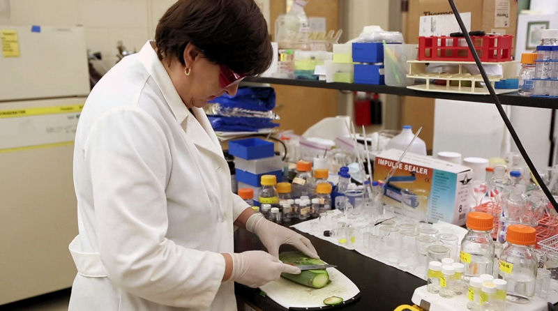 Norma Alcantar, professor in the department of chemical and biological engineering at the University of South Florida (Tampa), is researching ways that cacti mucilage can clean contaminated water. Photo courtesy of the American Chemical Society.