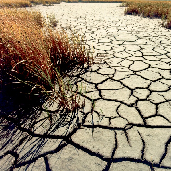 The Vegetation Drought Response Index incorporates satellite observations of vegetation to monitor at a finer spatial detail than other commonly used drought indicators. Photo courtesy of the USGS.