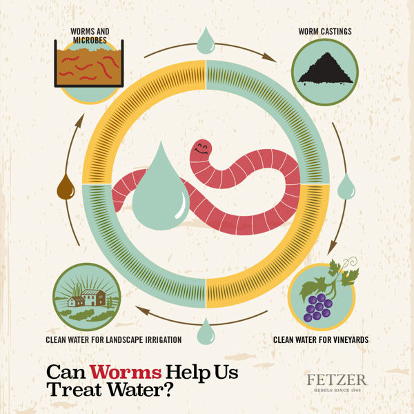Worms will process 15-million gal (57-million L) of wastewater a year at Fetzer Vineyards in Hopland, Calif. Photo courtesy of Fetzer Vineyards.