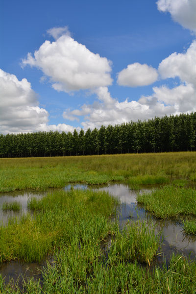 In addition to being irrigated by recycled wastewater, the farm's low-lying grasslands receive large helpings of rainwater. Photo courtesy of MWMC.